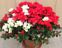 Plante fleurie - lejardindechauffin.com