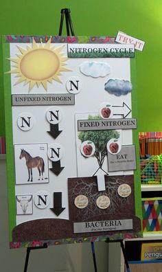 Active Anchor Charts Nitrogen Cycle Click to See More