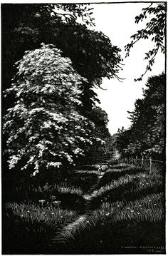 Denys Watkins Pitchford The Heart of the Forest