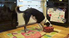 Check out my sister Dali's new trick... It's sure to make you smile :)
