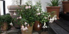 ROMANTISKE KRUKKER - Romantic garden containers