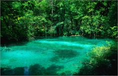 martin-moos-an-emerald-green-pool-surrounded-by-forest-in-the-plitvice-lakes-national-park-112663.jpg (500×323)