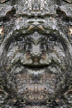 """Dream Creatures: Reflected Images of Tree Bark Reveal the Faces Hiding in the Forest Italian photographer Elido Turco taking photographs of tree bark and then mirroring the photographs discovered a whole society of """"Dream Creatures"""""""