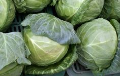 cabbage-natural-cure-for-stomach-gastric-ulcer