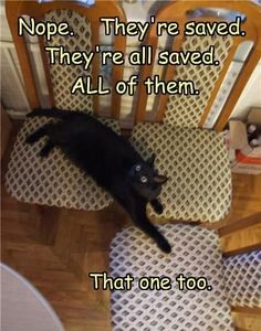 :) funny cat!! 'they're all saved'