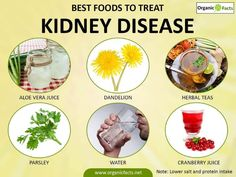 Important Best Herbs for Kidney Cleansing Ideas Kidney Cleanse Remedies Kidney disease can be very fatal if not treated in time. Read on to know about the treatments for kidney diseases, including dialysis, reduction in salt intake, Polycystic Kidney Disease, Chronic Kidney Disease, Diet For Kidney Disease, Kidney Infection Symptoms, Food For Kidney Health, Kidney Foods, Treatment For Kidney Disease, Kidney Detox Cleanse, Healthy Kidneys