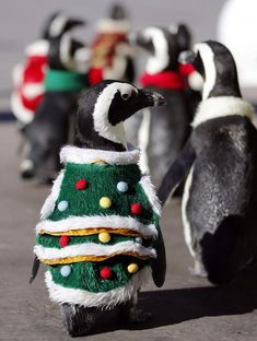 The penguins live not so far away from PNP Santa's village! They look great with Christmas cloths!