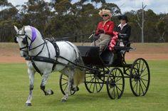 So Elegant, love carriage driving...