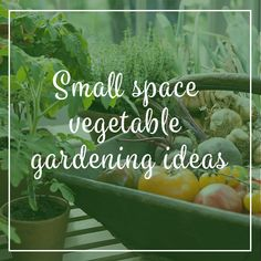 Check out our blog post about ideas on how to utilise small spaces for vegetable gardening.