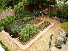 Mark's Veg Plot: My plot - love the pavers in between the beds and the pebbles around. This would go nicely with our lot