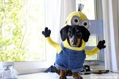 10 ideas con tutorial para disfrazar a tu perro / Mediterranean Natural