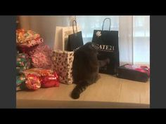 La curiosità di Ciccio gatto!!! - YouTube