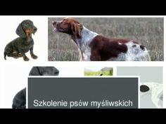 Szkolenie psów myśliwskich - nauka aportowania i posłuszeństwo dla psów ...