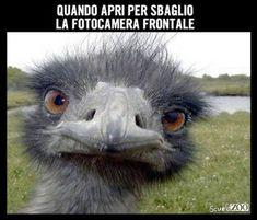 Immagini Divertenti  http://enviarpostales.net/imagenes/immagini-divertenti-361/ #barzeletta #divertente #umorismo