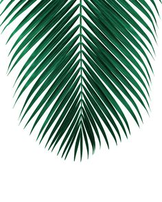 43 Ideas for green nature backgrounds palm trees Palm Tree Leaves, Green Leaves, Palm Trees, Tropical Art, Tropical Leaves, Tropical Plants, Bd Pop Art, Flowers Wallpaper, Palm Leaf Wallpaper