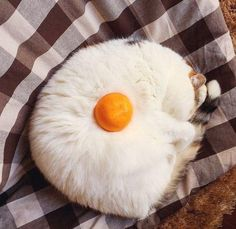 How would you like your morning cat? - LOLcats is the best place to find and submit funny cat memes and other silly cat materials to share with the world. We find the funny cats that make you LOL so that you don't have to. Funny Animal Jokes, Cute Funny Animals, Funny Animal Pictures, Cute Baby Animals, Animal Memes, Cute Cats, Funny Cats, Kittens Cutest, Cats And Kittens