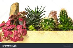 House plant. Room flowers in pot. Potted plants photography. Stock photography, images, pictures, Illustrations, ideas. Potted plants Images Download. Houseplant indoor. Potted flowers. House plant. Room flowers.