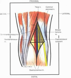 Knee Joint Anatomy, College Notebook, Elbow Pain, Sports Therapy, Medical Anatomy, Muscle Anatomy, Bones And Muscles, Anatomy And Physiology, Study Notes