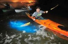 Bioluminescence is stronger and more prominent now across the Indian River Lagoon in north-central Brevard County than the past four years, said Jim Durocher, owner of Space Coast Kayaking. Indian River Lagoon, Beach Glow, South Florida, Cocoa Beach Florida, Merritt Island, Kayak Tours, Water Pollution, Florida Travel