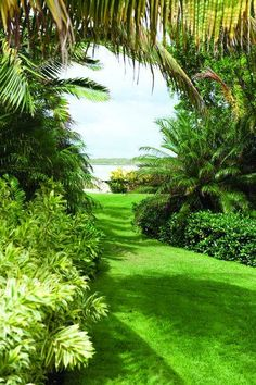 Delicieux Tropical Garden