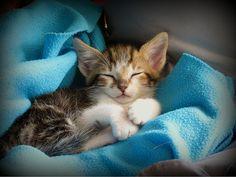 Timon | Flickr – Compartilhamento de fotos!