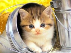 Animals Tell Us What's On Their Bucket List