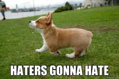 My corgi walks the same way when she did somthing wrong.So it is to cute,to hate