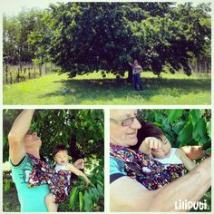 Harvesting cherry in a ring sling with grandpa :)  #Harvesting #Babywearing #RingSling #LiliputiStyle