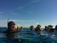 Snorkelling the Great Barrier Reef www.parkmyvan.com.au #ParkMyVan #Australia #Travel #RoadTrip #Backpacking #VanHire #CaravanHire