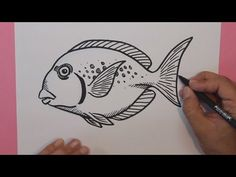 Cómo dibujar peces tropicales 3 (Pez Loro) - How to draw tropical fish (parrotfish) - YouTube