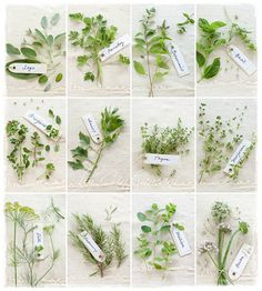 Herb's Project (see it on white, please) by Cintamani ;-), via Flickr
