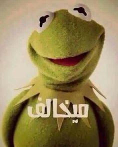 ميخااالف ... ايوى Arabic Funny, Funny Arabic Quotes, Funny Quotes, Emoji Images, Funny Comments, Kermit, Funny Stickers, Funny Pictures, Teddy Bear