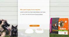 Win a years supply of Iams cat or Eukanuba dog food
