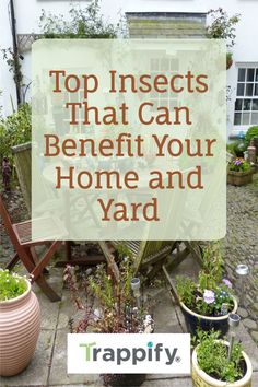 In this article, we will help you better understand how to recognize beneficial insects and how to research and find out what they're doing to your environment. Indoor Vegetable Gardening, Organic Gardening Tips, Hanging Plants, Indoor Plants, Insect Eggs, Thistle Seed, Garden Insects, Weed Seeds