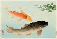 Common and Golden Carp  by Ohara Koson, 1935