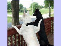 Cute animal photos - canine best friends