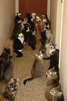 Home of Crazy Cat Lady! She's late for their evening meal! How many cans of cat food will she need?