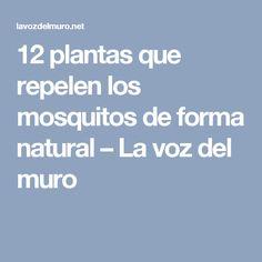 12 plantas que repelen los mosquitos de forma natural – La voz del muro