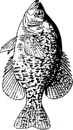 crappie fishing art Fishing Tips - Crappie fishing art Crappie Fishing Tips, Fly Fishing, Fishing Rods, Fishing Tricks, Magnet Fishing, Trout Fishing, Fishing Tackle, Fish Coloring Page, Coloring Pages