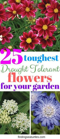 25 Drought Resistant Perennials is part of Garden shrubs - Searching for plants that get by with less water like drought resistant perennials Plants that thrive and still look amazing! Need less frequent waterings Garden Shrubs, Garden Plants, Perenial Garden, Clematis Plants, Dry Garden, Potager Garden, Garden Compost, Pot Plants, Rain Garden