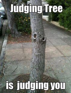 judging tree
