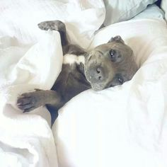 How cute is this guy laying up in the middle of the bed...makes me smile!