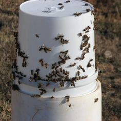 I have decided to set up feeding stations in my bee yard and I want to share my experience with you.