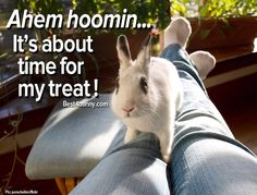 Bunnies always know when it's treat time! www.best4bunny.com