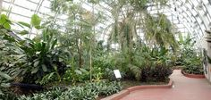 Designed as an idealized tropical landscape, THE PALM HOUSE where graceful palms, interspersed with a variety of other tropicals, soar up to a vaulted ceiling. This room underwent a restoration of its structure and plant collection in 2003.