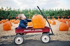 Pumpkin Patch Season! | Laura Pope Photography