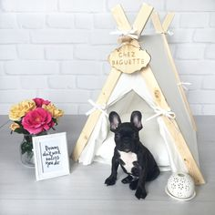 Simple Life Tent. Cute and unique tents/teepees pet beds for dogs and cats.