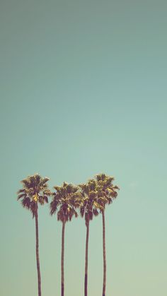 3 California Palm Trees Against Pastel Teal Sky Minimalist Landscape Photography Framed Art Print by Earthscape - Vector Black - Palm Tree Iphone Wallpaper, Summer Wallpaper, Wallpaper Backgrounds, Phone Wallpaper For Men, Mobile Wallpaper, Iphone Wallpapers, Blue Sky Photography, Framing Photography, Landscape Photography