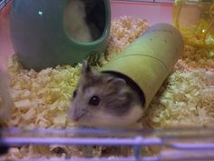 home made hamster toys! The website is cool too.