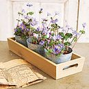 Wooden Tray And Herb Pots - pots & windowboxes